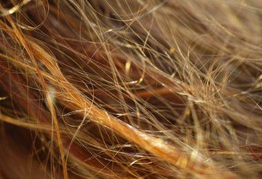 argile cheveux secs